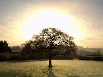 winter solstice free screensaver